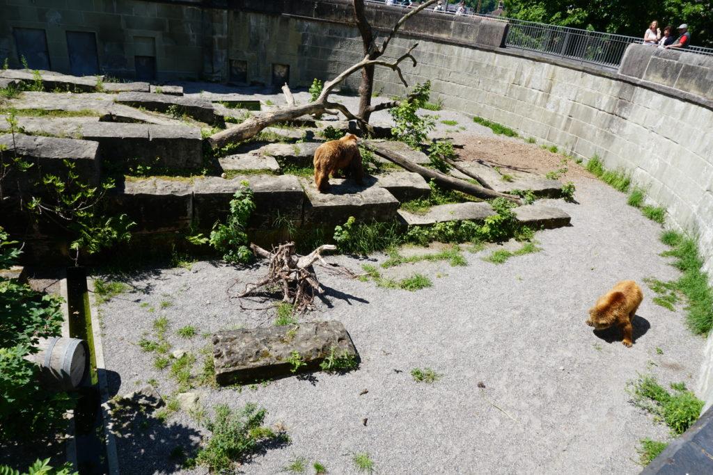 parc ours berne