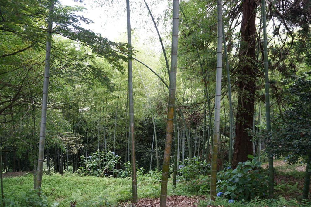 jardin botanique batoumi