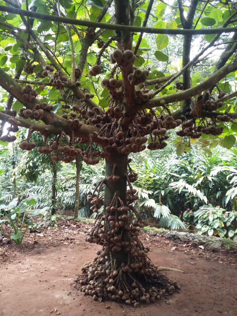 cinnamon garden kerala