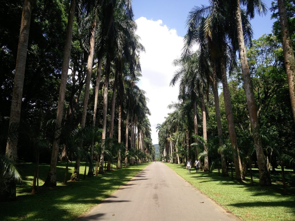 botanical garden kandy