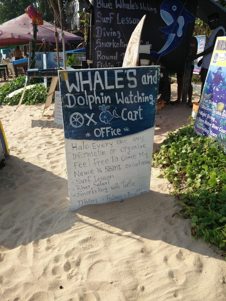 whales show mirissa beach