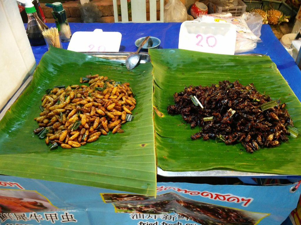 insectes night market pai thailande
