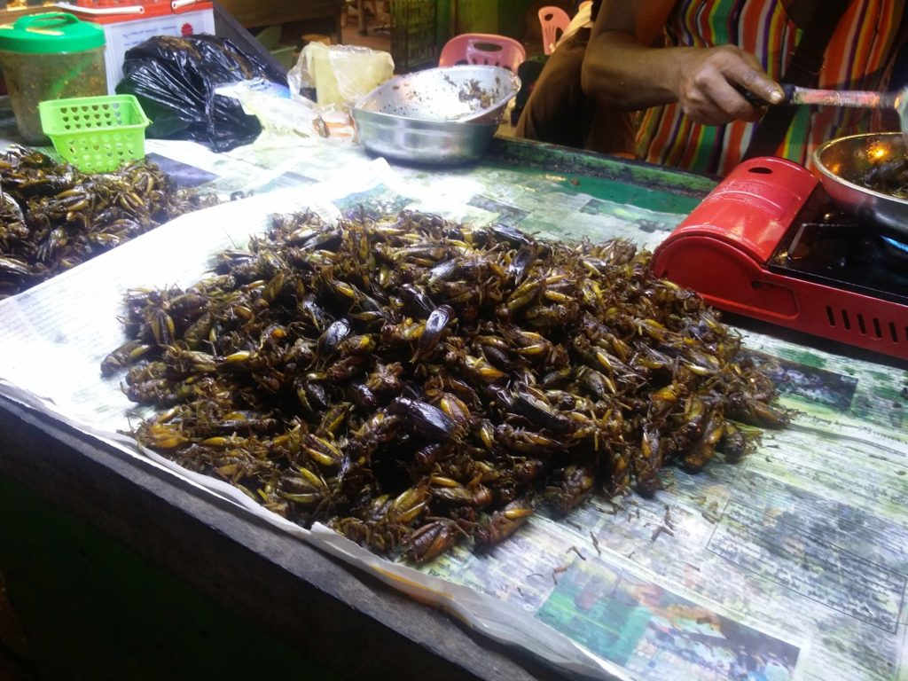insects myanmar
