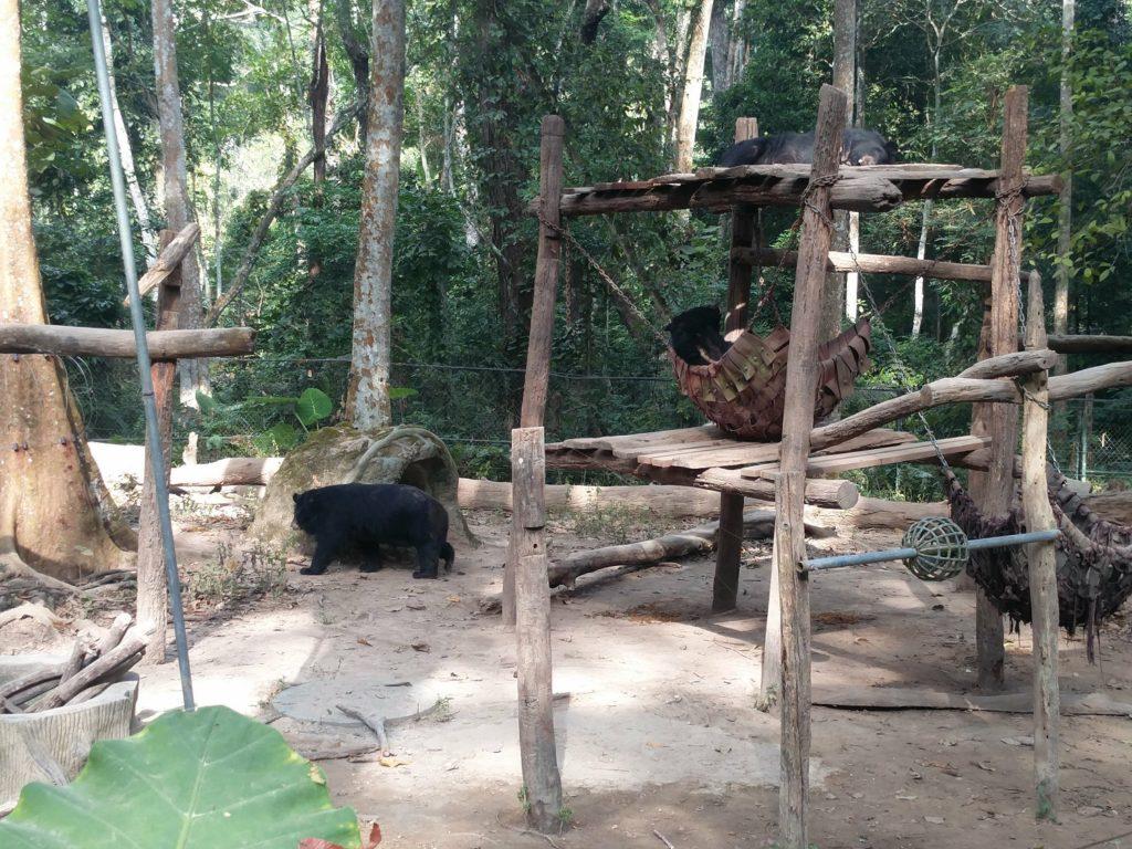 sanctuaire d'ours kuang si falls