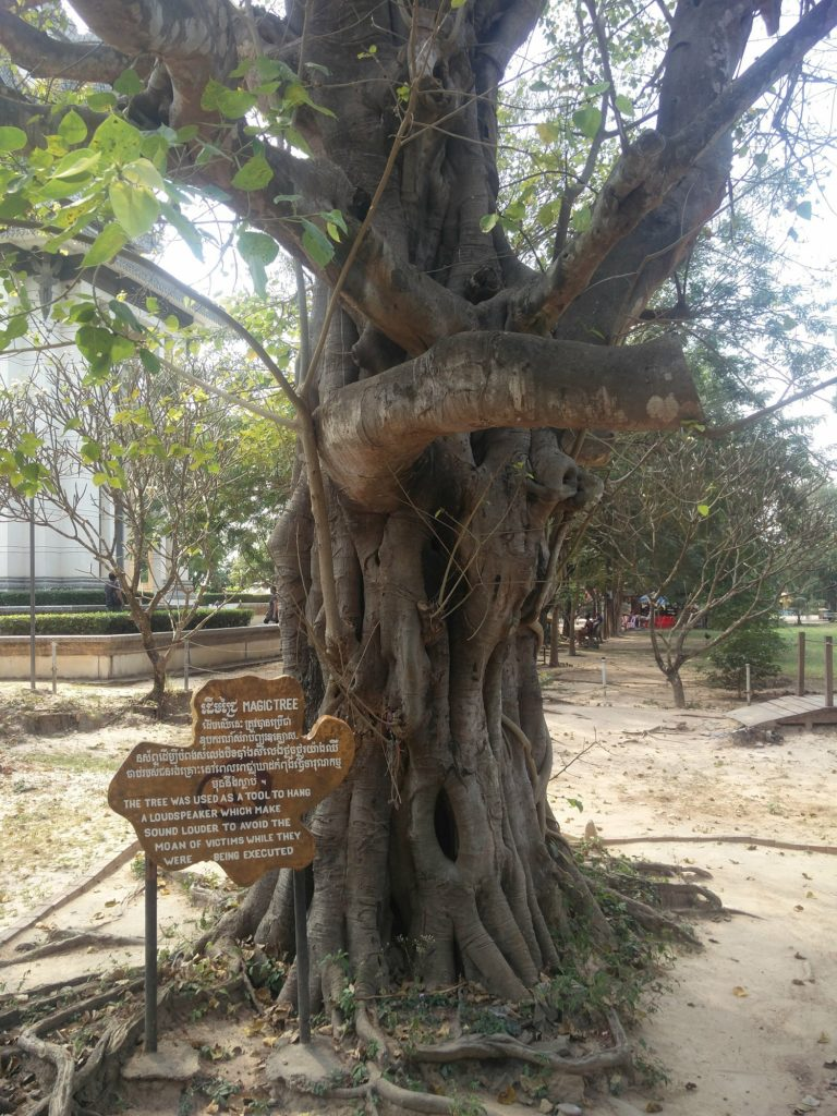 magic tree killing fields