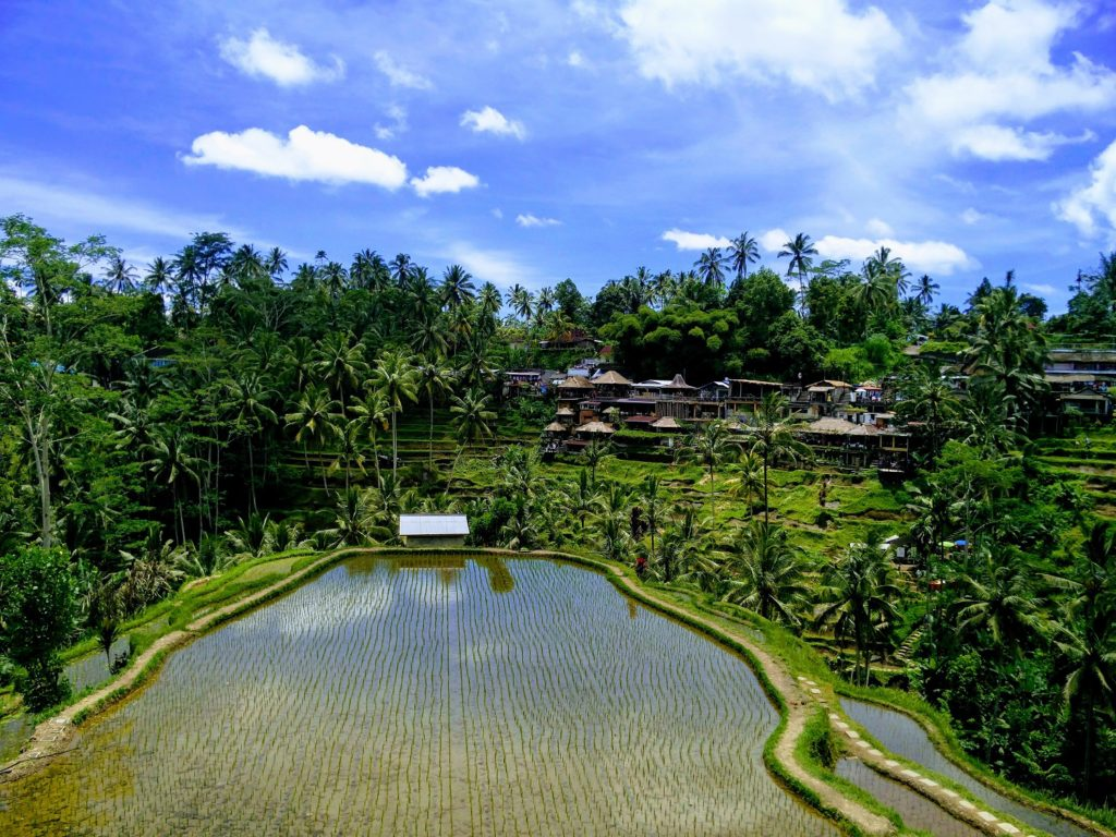 tegallalang rice terrace ubud bali cheap flights