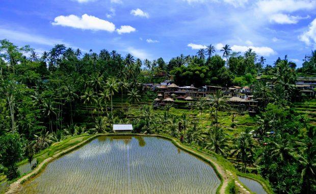 tegallalang rice terrace ubud bali vols pas cher