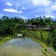 Ubud à Bali : rizières, temples et singes