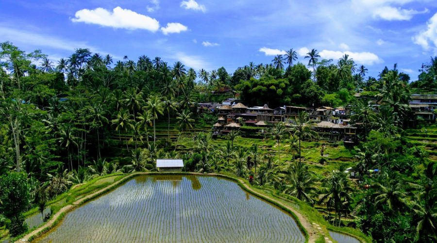 Ubud in Bali : rice fields, temples and monkeys