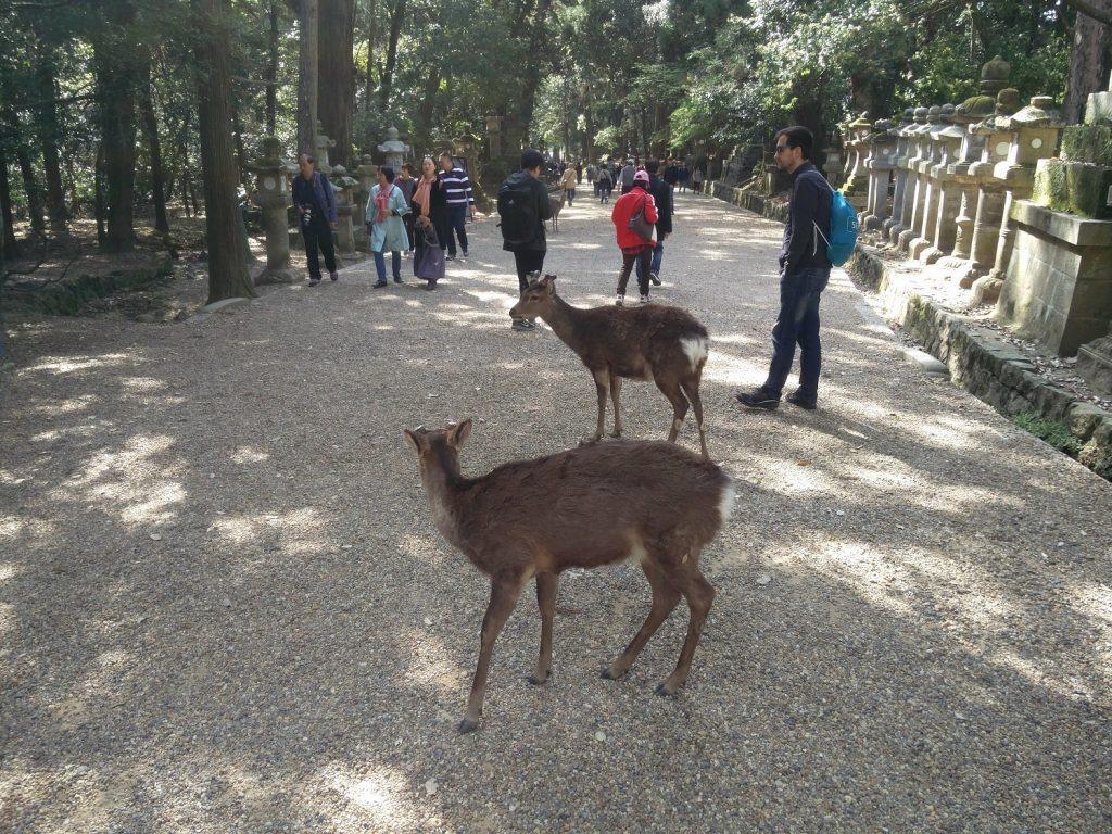 deers nara