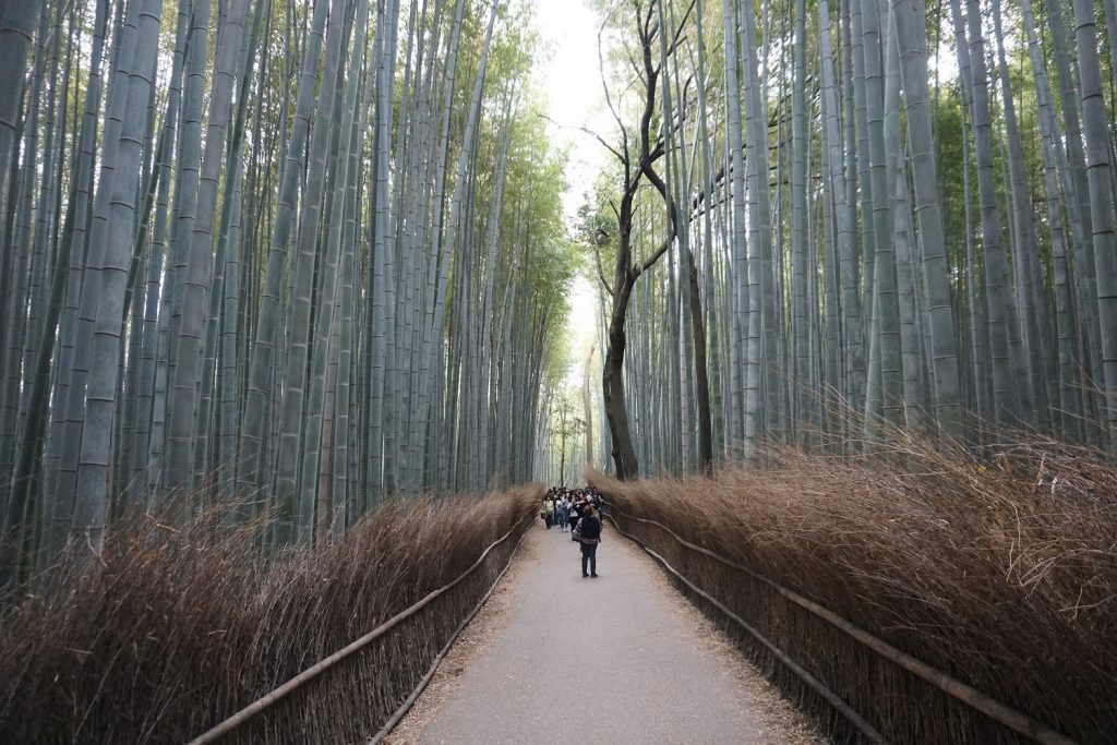 foret de bambous d'arashiyama kyoto