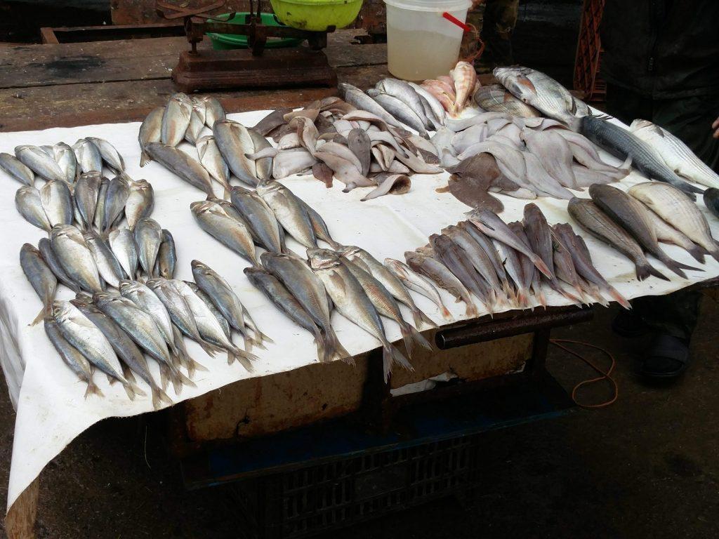 poissons essaouira