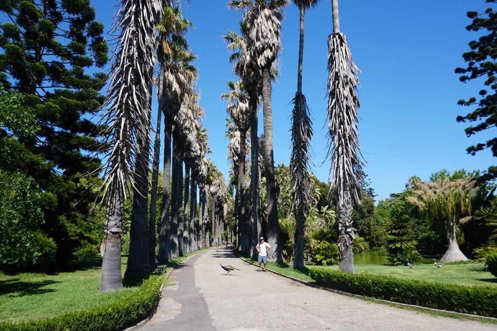 botanical garden lisbon