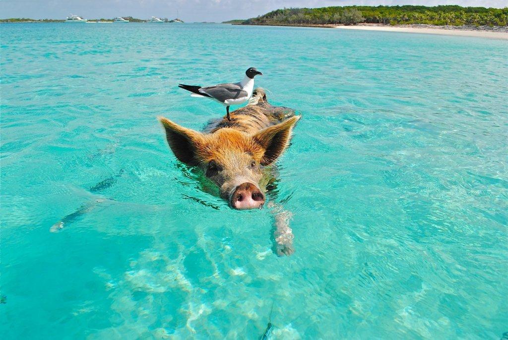 major cay bahamas