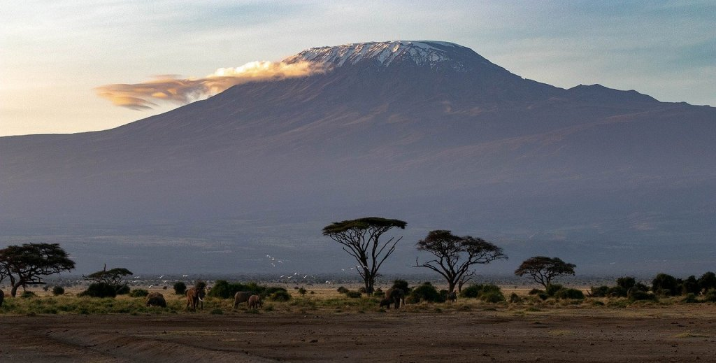 view on the kilimanjaro